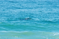 Sea-Life-Dolphins-Gallery011