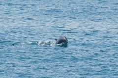Sea-Life-Dolphins-Gallery05