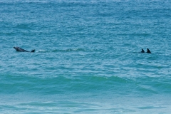 Sea-Life-Dolphins-Gallery06