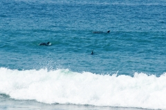 Sea-Life-Dolphins-Gallery08
