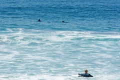 Sea-Life-Dolphins-Gallery09