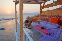Samos-Greek-Cats15