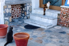 Samos-Greek-Cats17