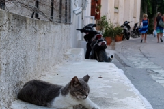 Samos-Greek-Cats22