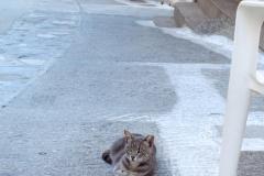 Samos-Greek-Cats24