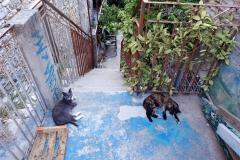Samos-Greek-Cats26