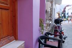 Samos-Greek-Cats27