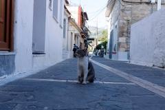 Samos-Greek-Cats34