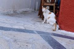 Samos-Greek-Cats35
