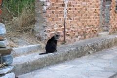 Samos-Greek-Cats40