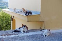 Samos-Greek-Cats65