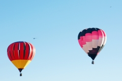 aibf-Single-Balloons-Gallery15