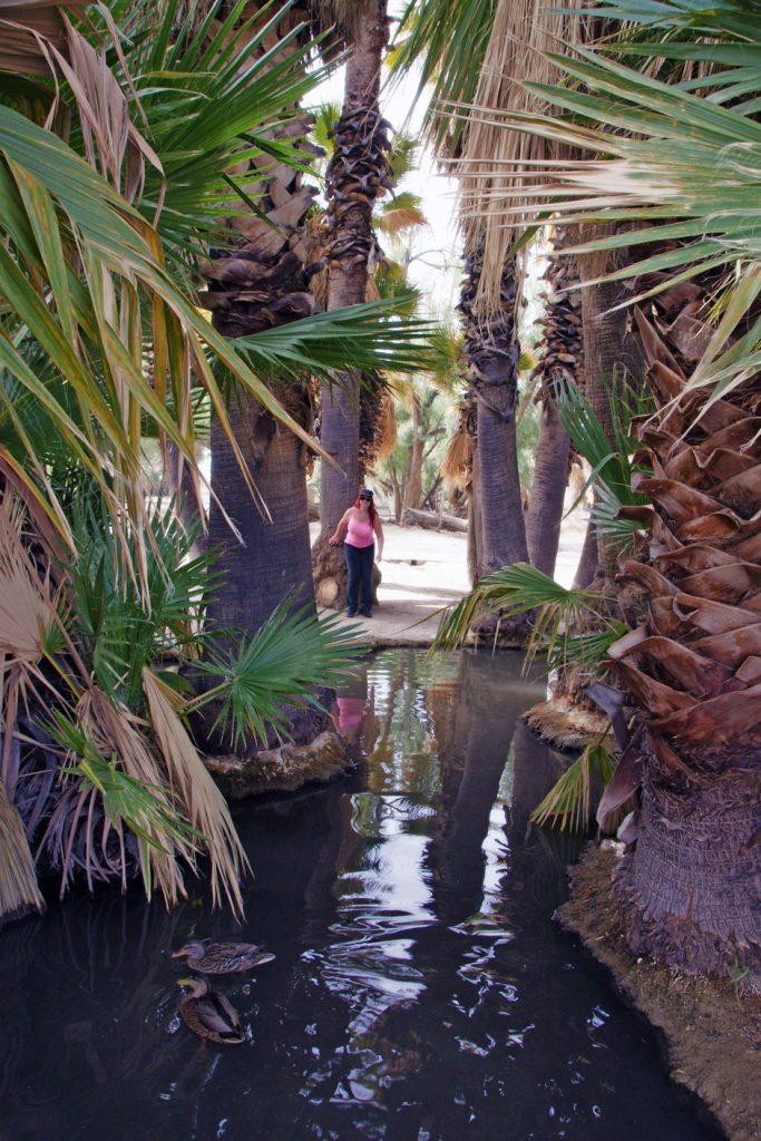 The waters of Agua Caliente Park provide shelter from the desert heat.