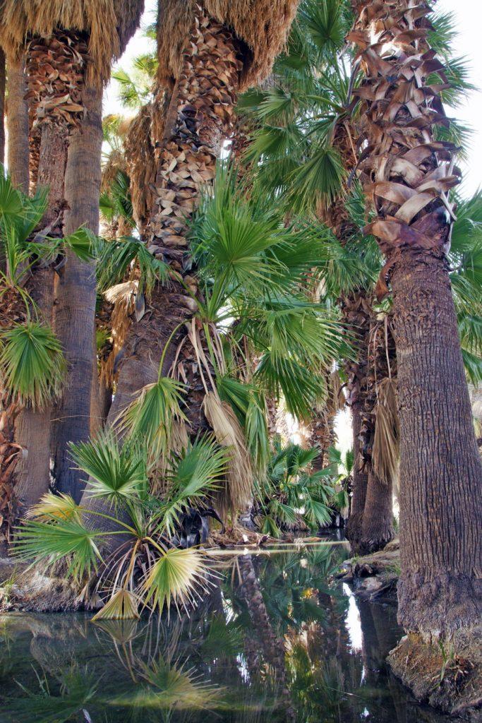 An oasis in the Arizona desert.