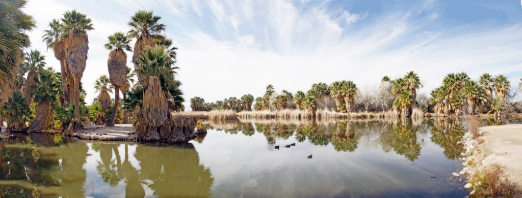 A panoramic view of Agua Caliente Park.
