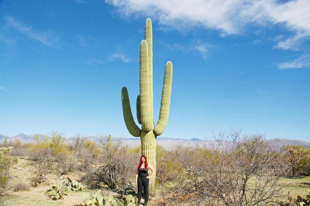 Saguaro cactus, when fully hydrated, can weigh up to 4800 pounds.