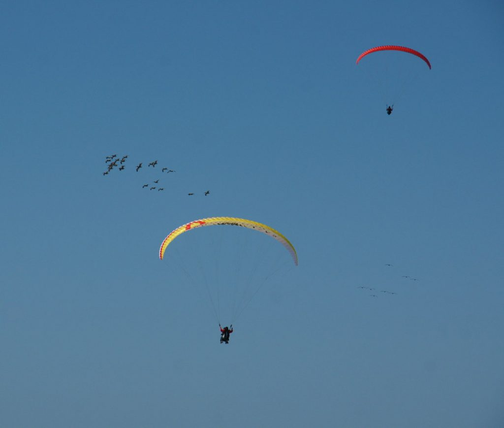 Fly a paraglider.