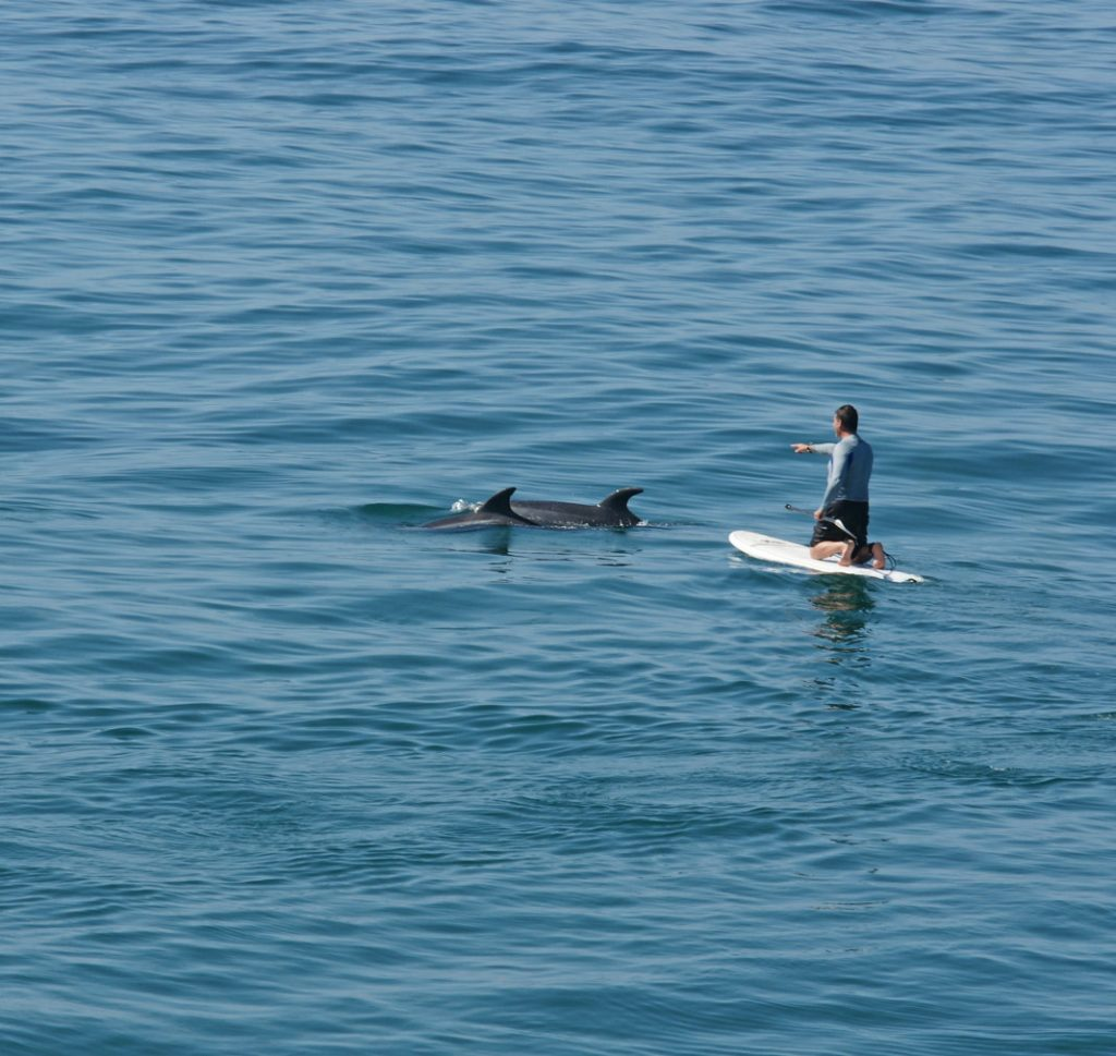 Paddleboard near dolphins.