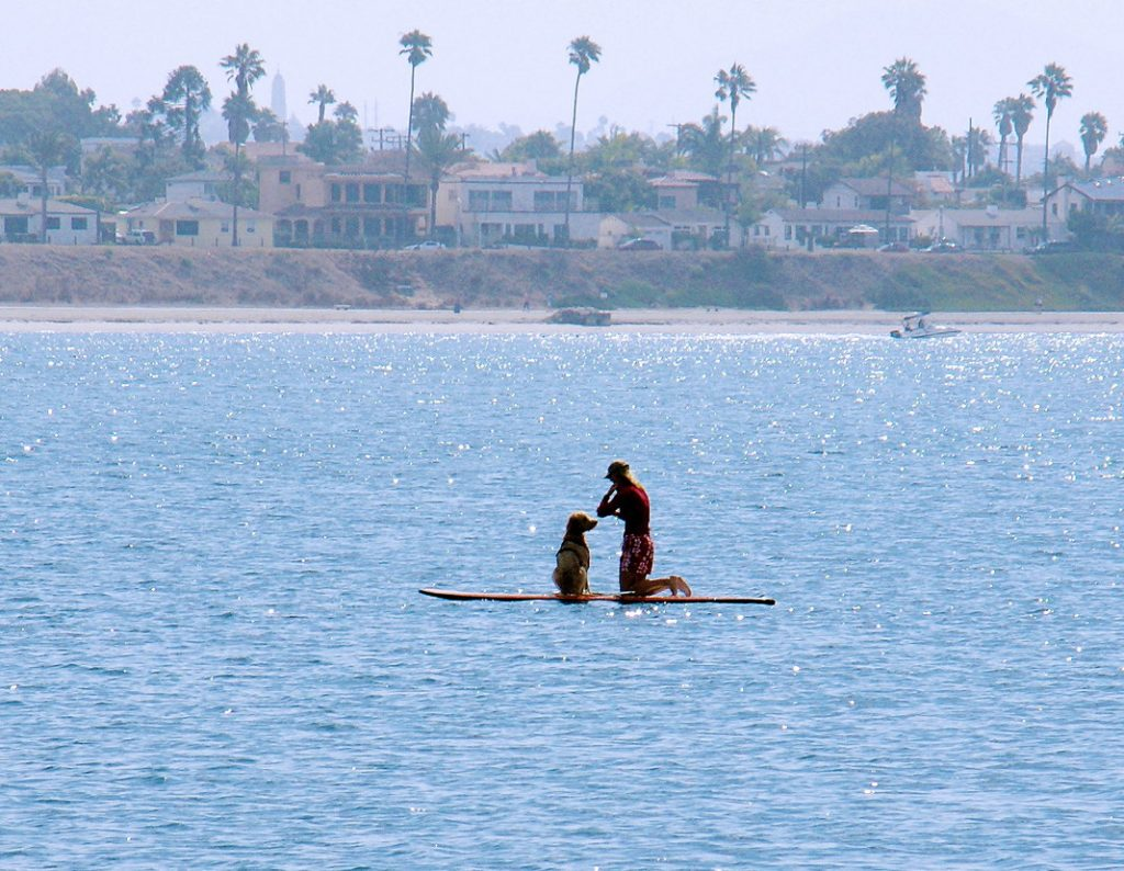 Paddleboard with your dog.