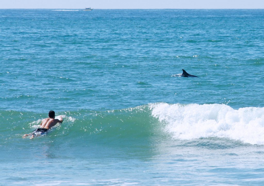 Surf with dolphins.
