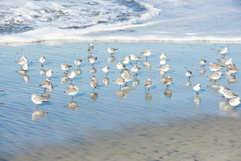 Watch the shorebirds.