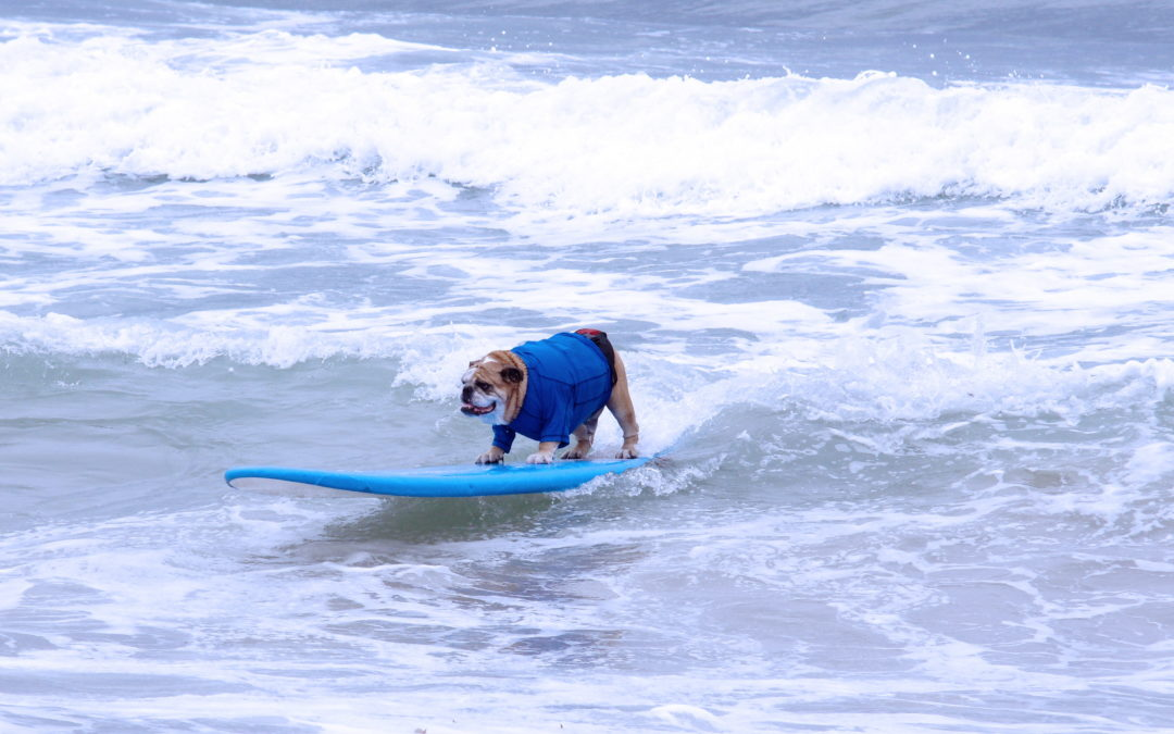 Surfing Goes to the Dogs