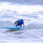 Dog Surfing, San Diego style.