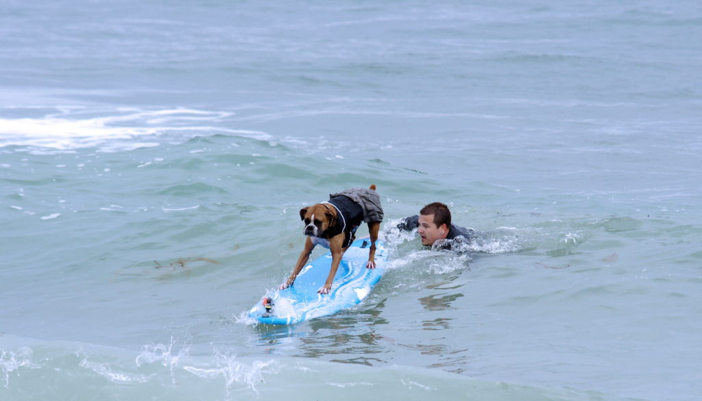 Surferdog gets a helping push from its helper.