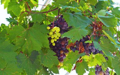 Samos in Summer – Part 2