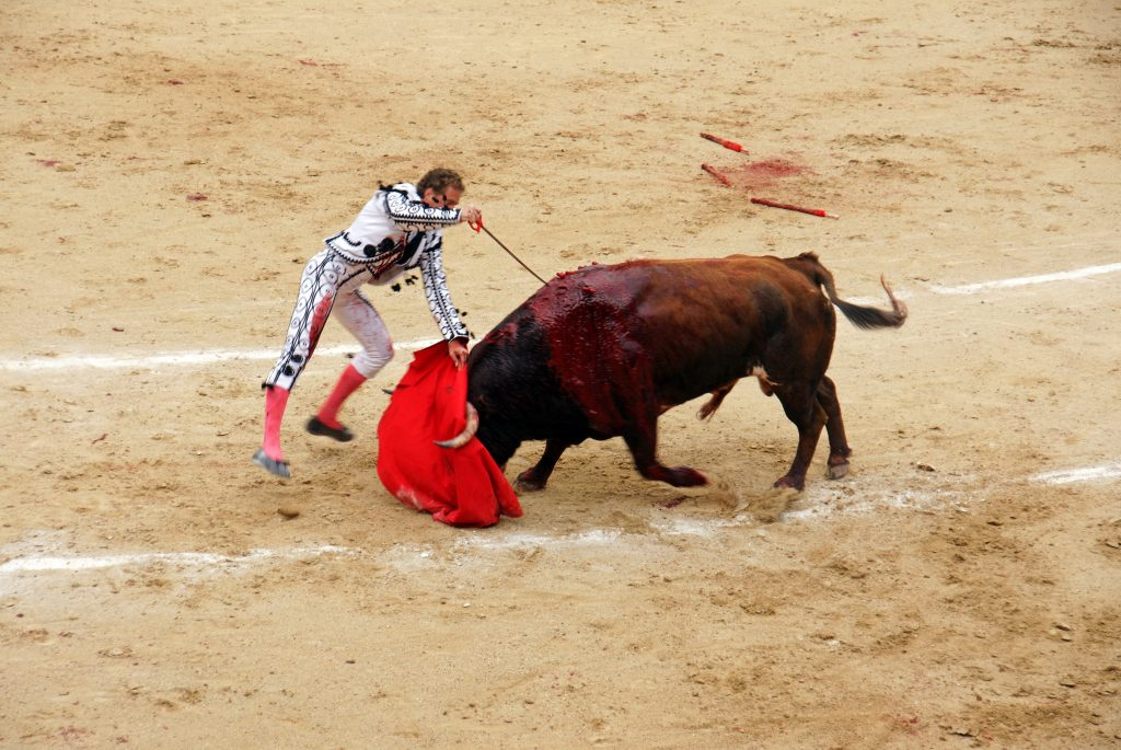 The bull charges weakly, and the stab is made.