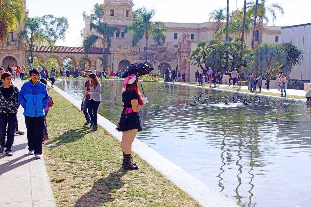 Mallards enjoying the lily pond.
